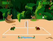 Turtles Volleyball